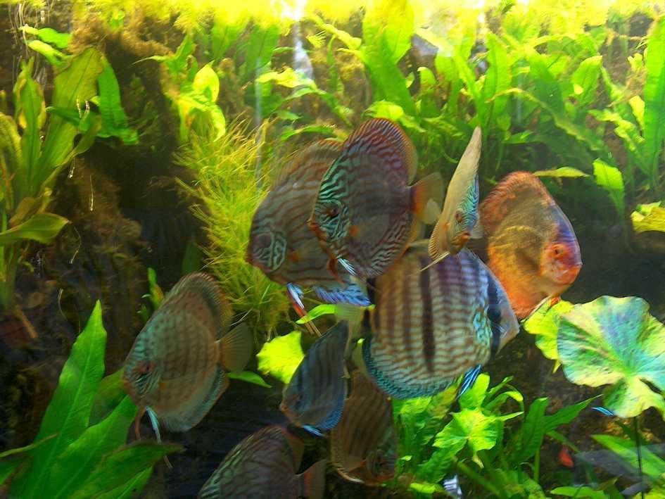 pflanzen set f r 600 800 l aquarium wasserpflanzen kv ebay. Black Bedroom Furniture Sets. Home Design Ideas