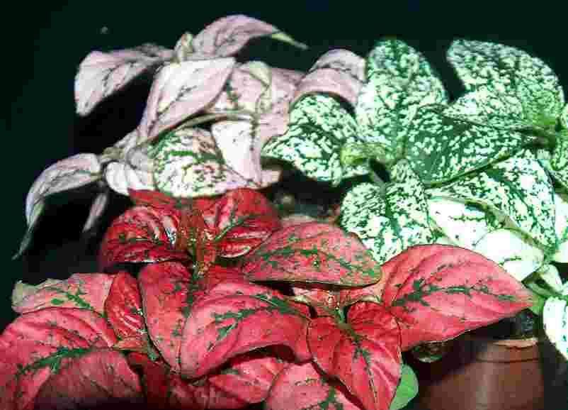9 vers topfpflanzen f r regenwald paludarium terrarium ebay for Topfpflanzen pflanzen