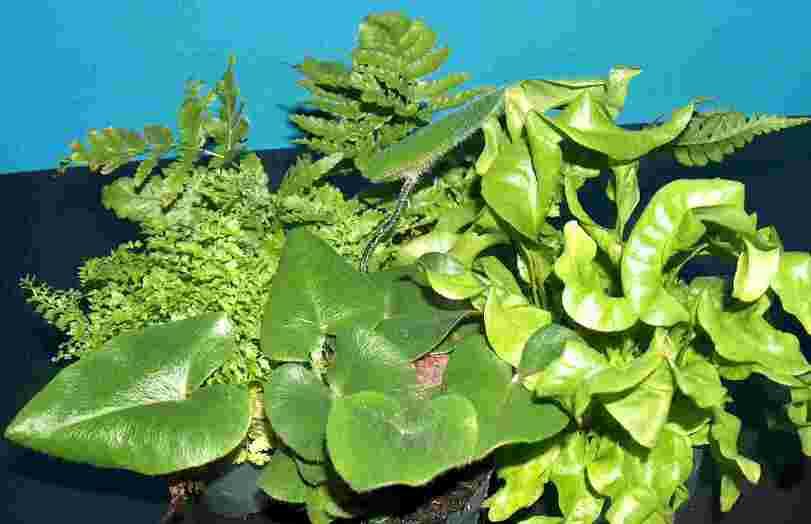 Pflanzen wohnzimmer geeignet ihr ideales zuhause stil for Pflanzen wohnzimmer geeignet