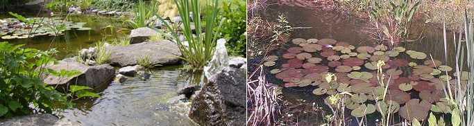 Anti Algen Set für Teich, Wasserpflanzen, Gartenteich | eBay